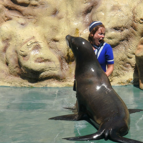 9389d21b ... Sea Lion And Humans: Free Sound Effect